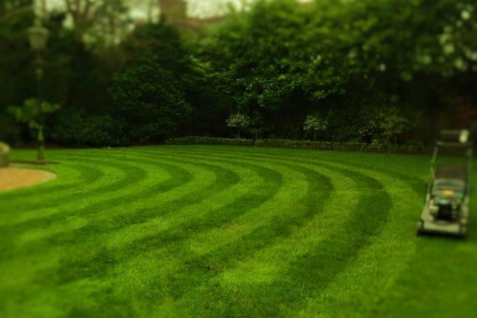 Stripes on lawn