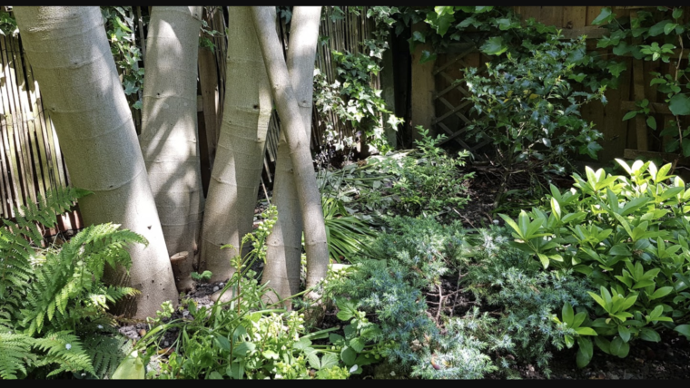 Reflecting on six years in a North London garden